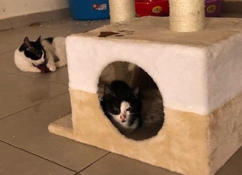 kittens adoptie