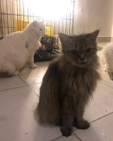 pers poes kat adoptie adopteren