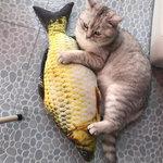catnip speelgoed katten vis