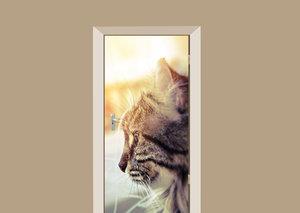 Deursticker kat in het zonlicht
